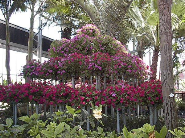 Visiting Bonfante Gardens